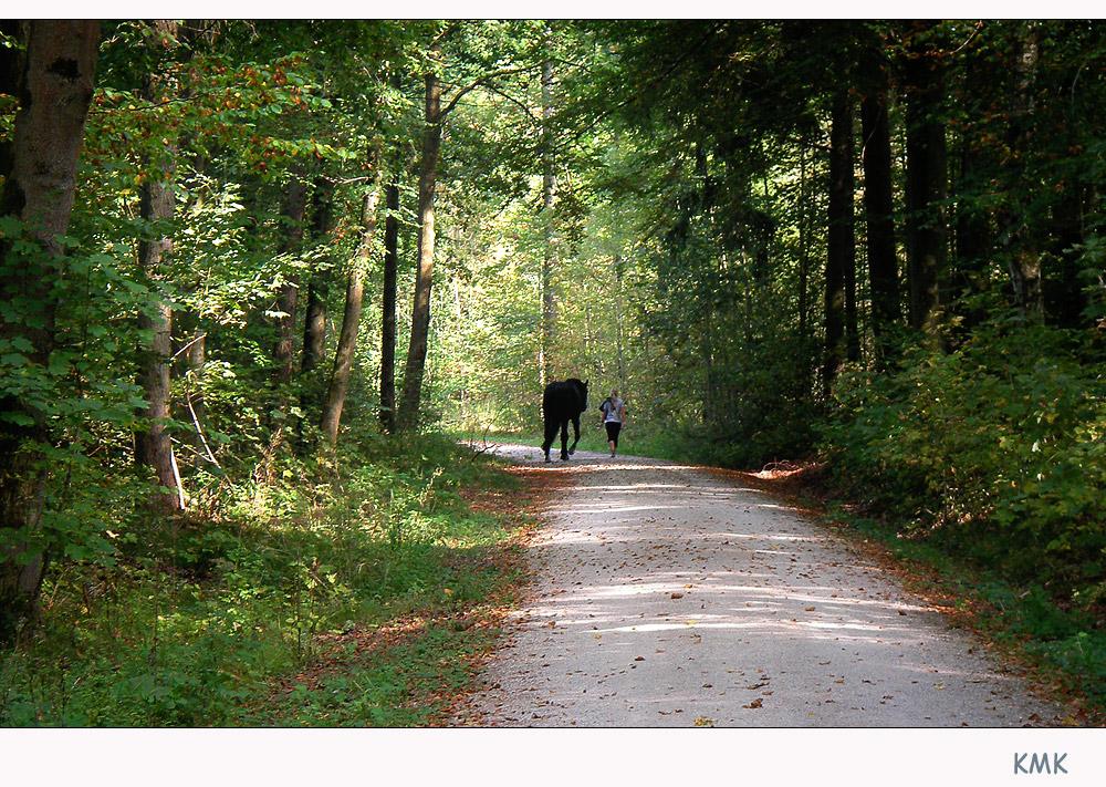.... wer sein Pferd liebt führt es ohne Sattel spazieren ....