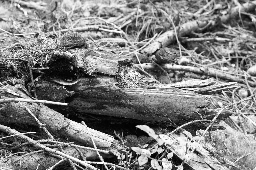 Wer sieht das Krokodil?
