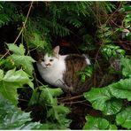 Wer tigert durch den Garten bei Regen und Wind?