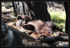"""""""Wer weckt mich da?"""" - Yosemite NP"""
