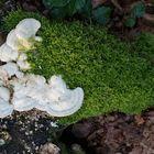 Wer will hier wen verdrängen? Moos Pilz oder umgekehrt?
