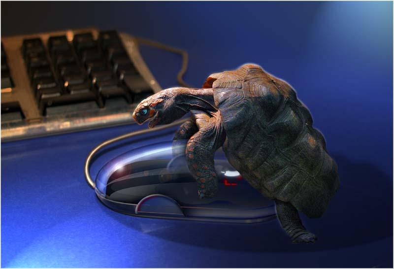 Werden so Mäuse gemacht?