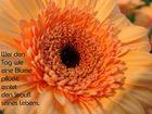 Wertvolle Blumen
