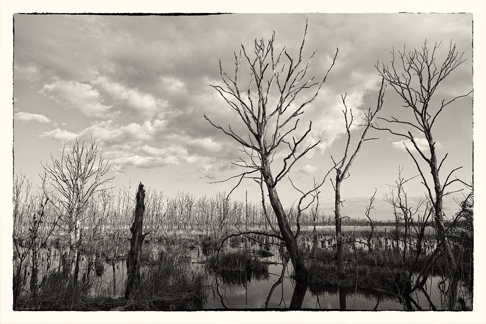 Wesen im Moor