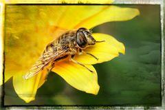 Wespe auf der Blüte