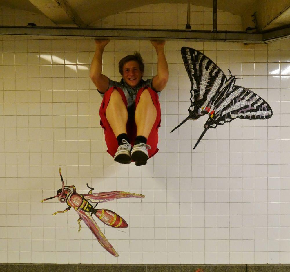 Wespen, Schmetterlinge ...