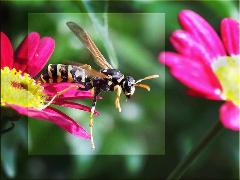 Wespensprung
