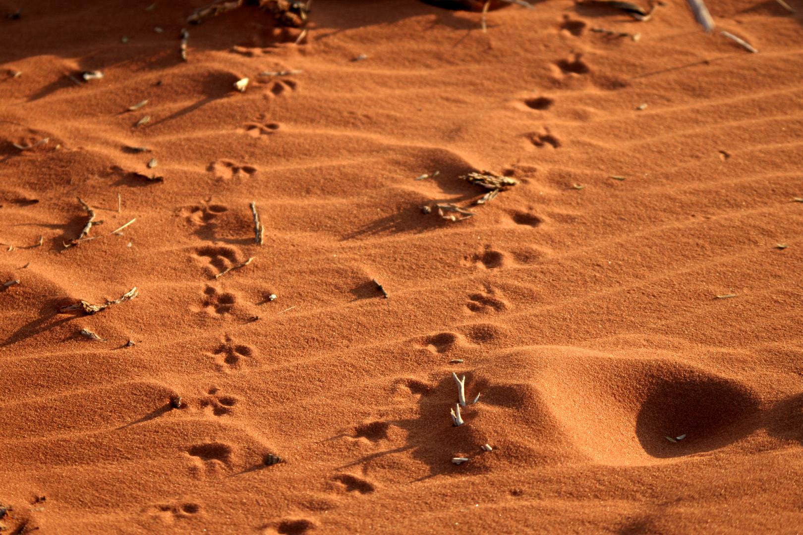 Wessen Spuren im Sand?