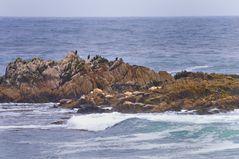 West Coast islanders