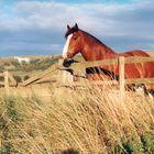 Westbury Whitehorse, Wiltshire / 1999