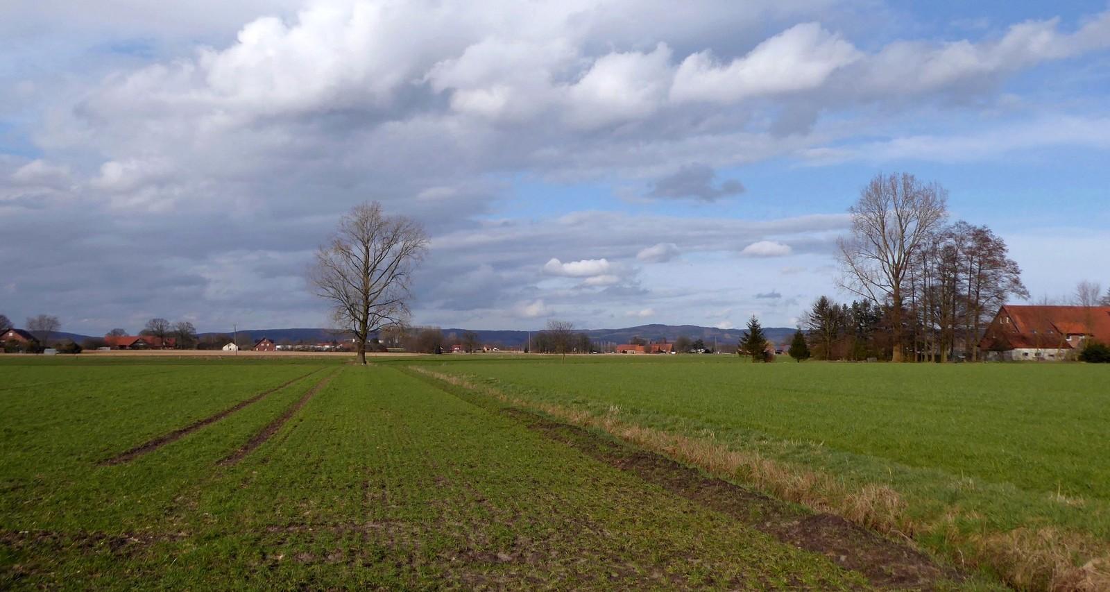 Westfälische Landschaft im Februar