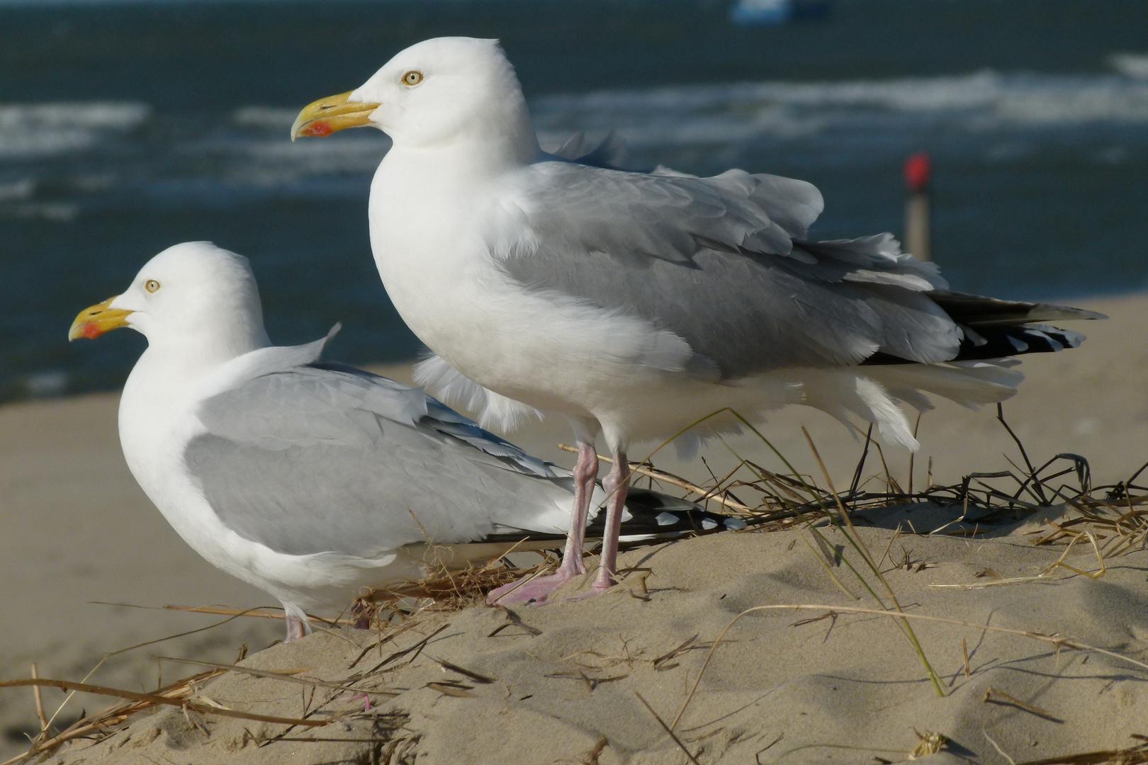 Westfriesische Insel -Texel 2012