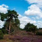 Westruper Heide 1