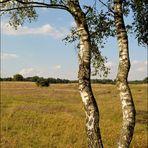 Westruper Heide (3)