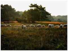 Westruper Heide (4)