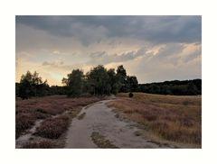 Westruper Heide (5)
