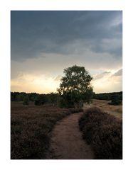 Westruper Heide (6)