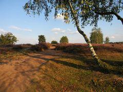 Westruper Heide (7)