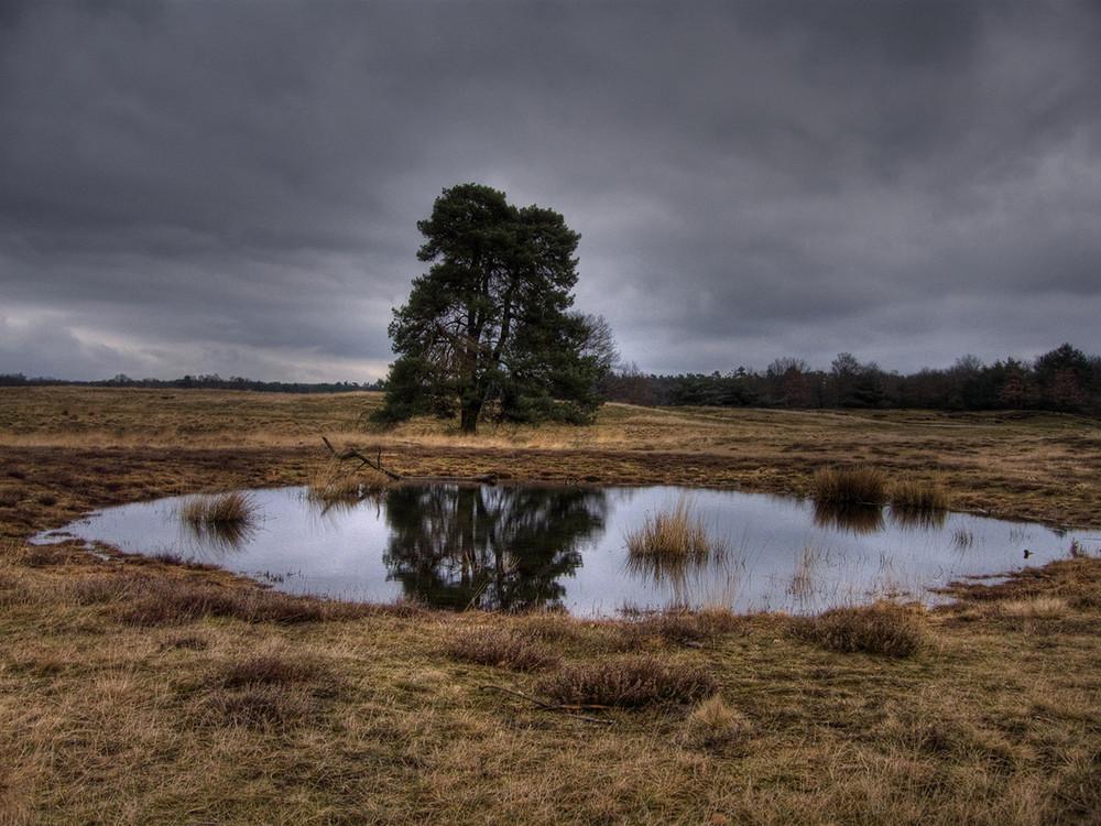 Westruper Heide in Haltern am See