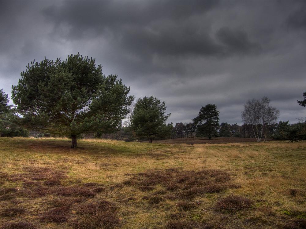 Westruper Heide in Haltern am See II