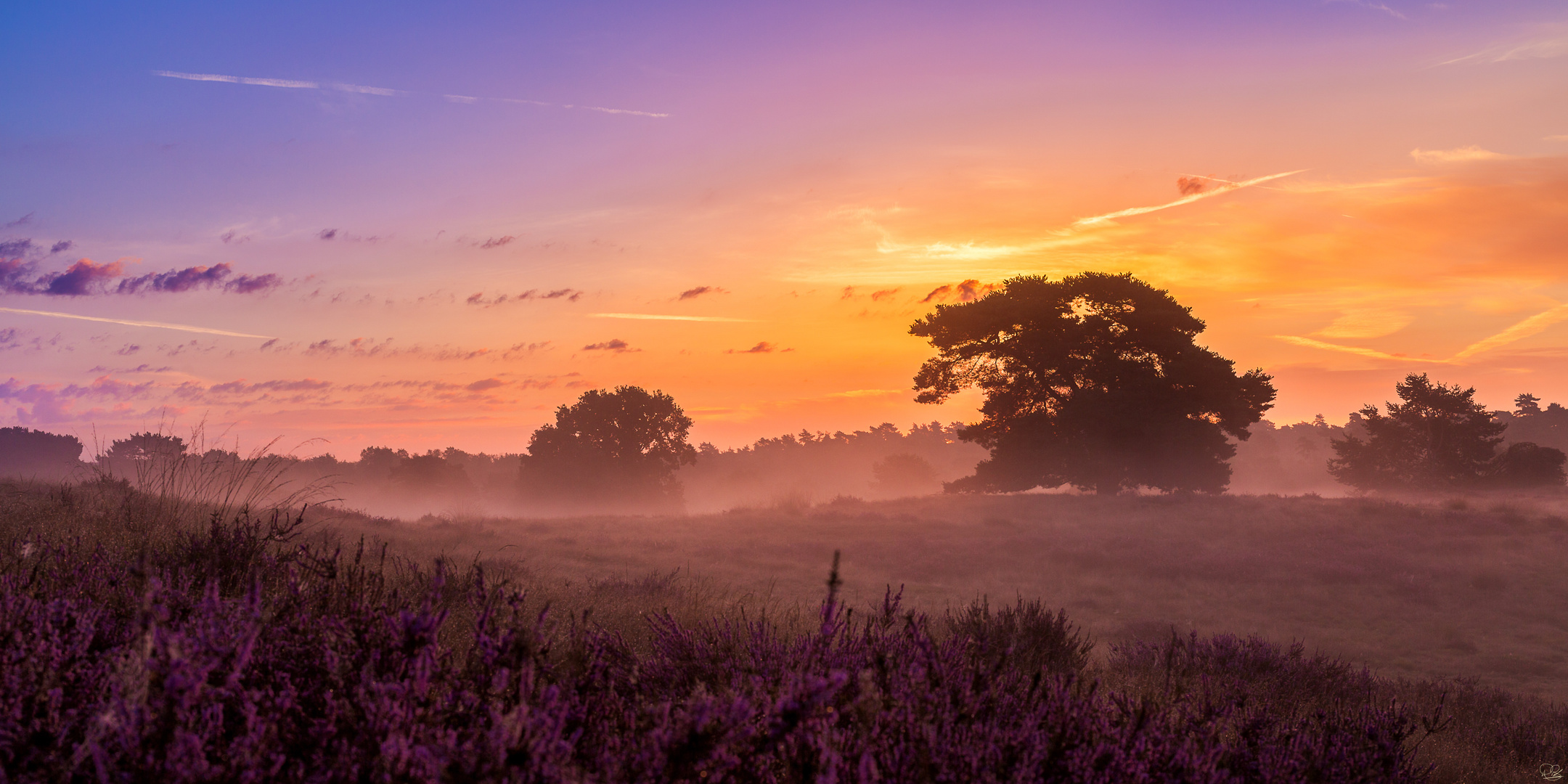 Westruper Heide vor Sonnenaufgang