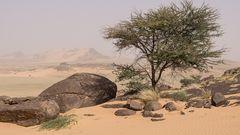 Westsahara 2016