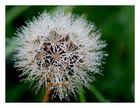 __Wet Flower__