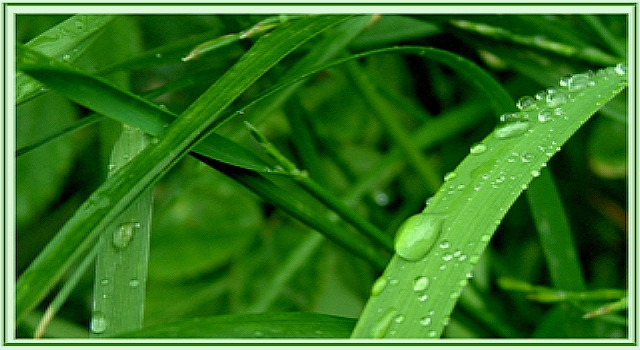 Wet Gras