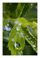 Wet in the rain 2