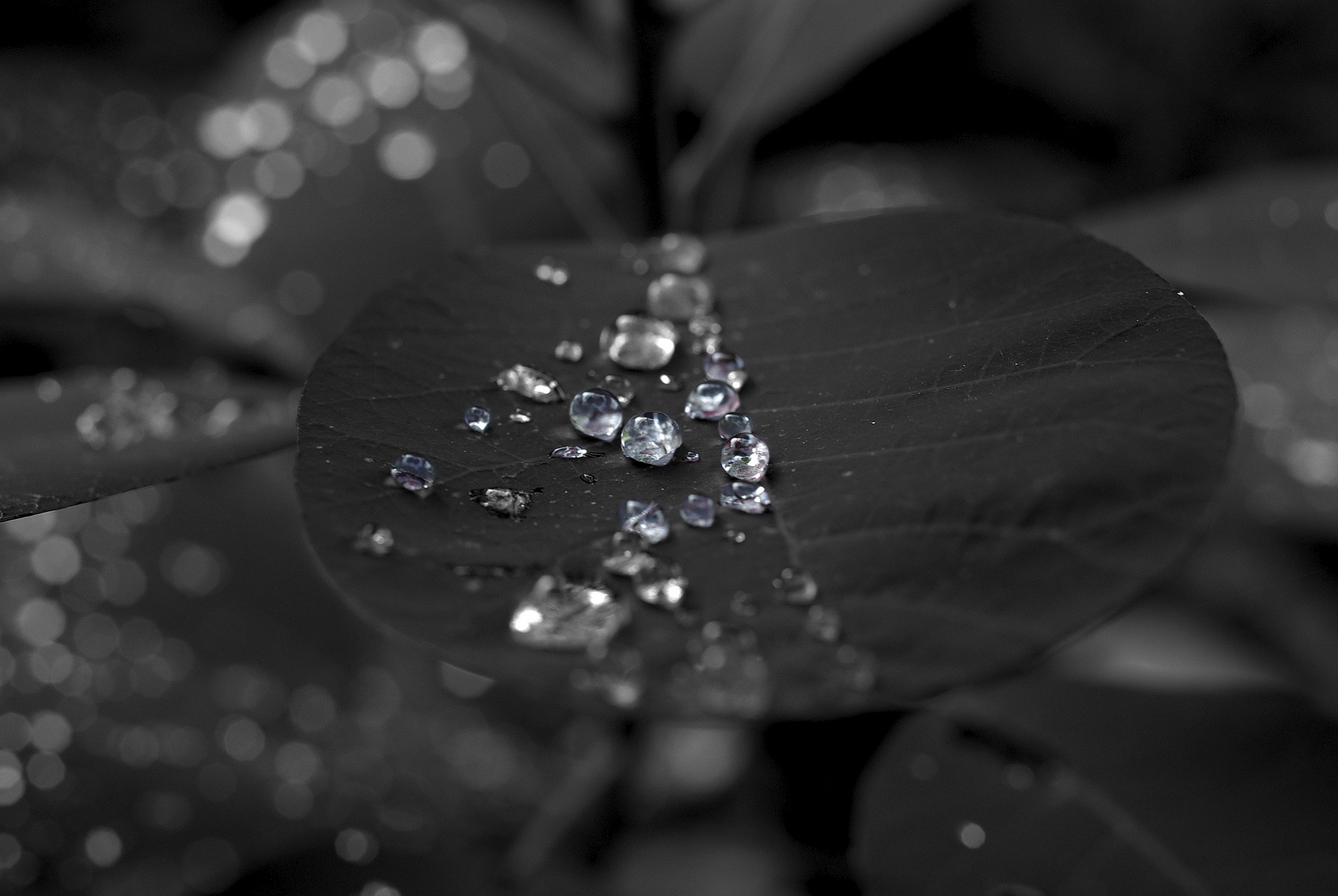 Wet Leaf with sparkle