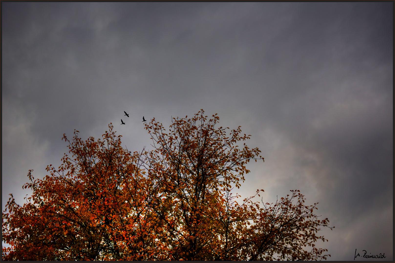 Wetterbericht 16_10_2013