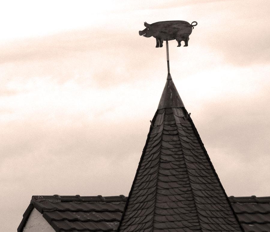 Wetterschwein