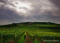 Wetterumschwung in den herbstlichen Weinbergen