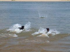 Wettschwimmen