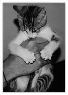 WG-Katze 2
