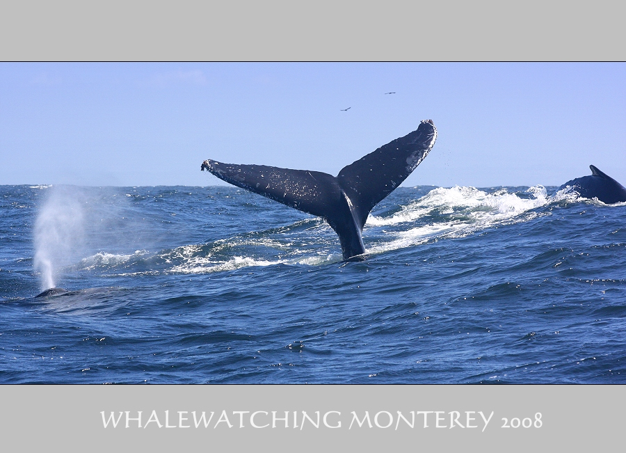 ... Whale Watching ... #6