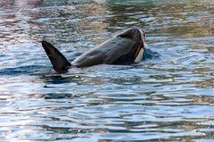 Whale watching auf Teneriffa