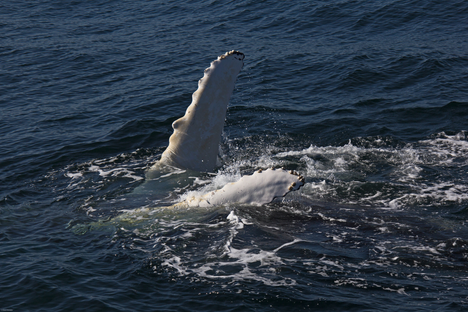 Whale Watching in der Bay of Fundy (3)