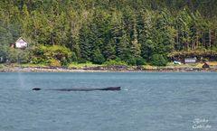 Whalewatching II