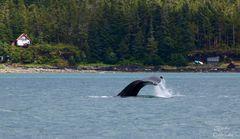 Whalewatching IV