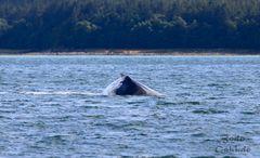 Whalewatching V