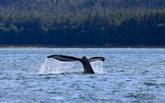 Whalewatching VI