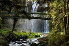 Whangarei Falls - Neuseeland - Nordinsel