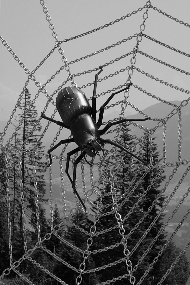 What a spider!