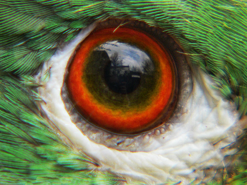 What an eye of a parrot can see (BW=420mm KB)