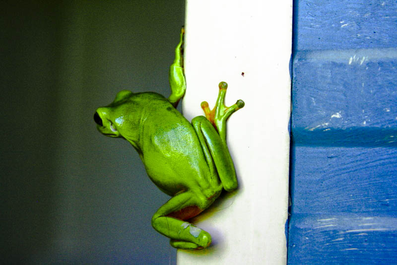 What da frog's going on over there...?