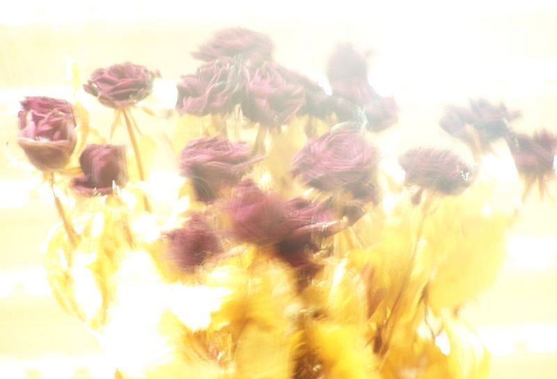 ^When a rose begins to burn like my love for you......