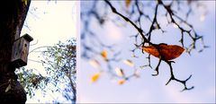 when autumn leaves start to fall ...