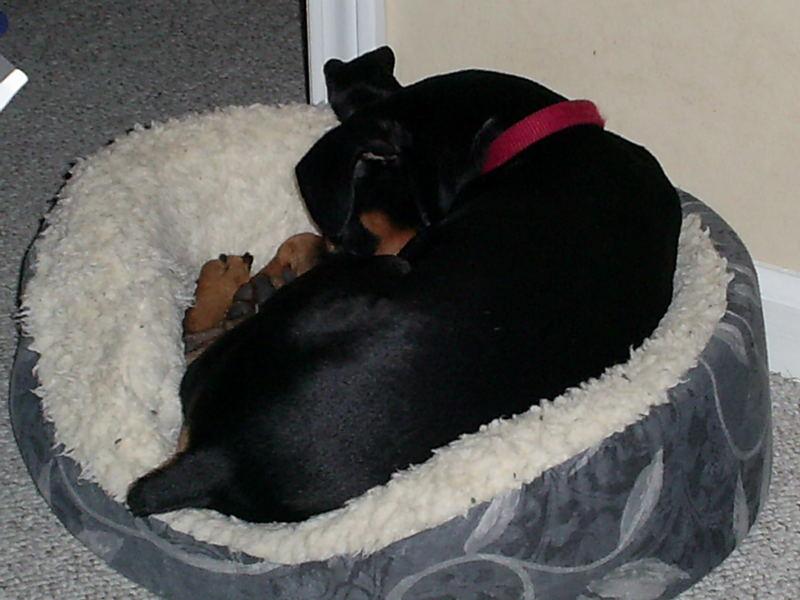 When Bailey sleeps