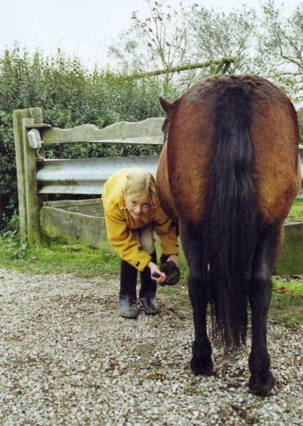 When Your High Horse dies......